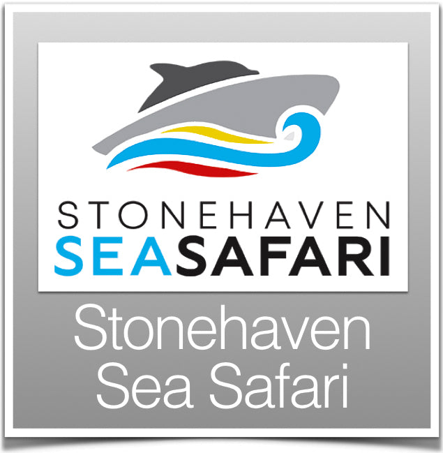 Stonehaven Sea Safari
