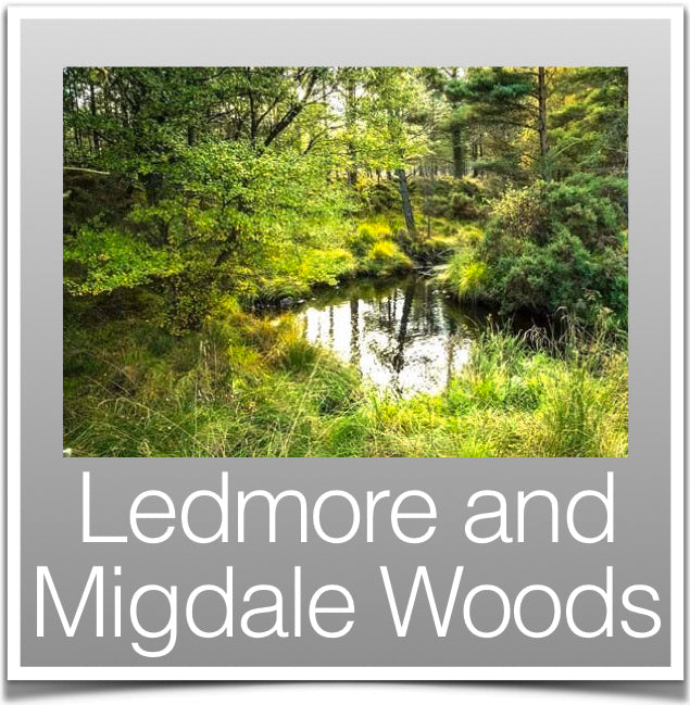 Ledmore and Migdale Woods