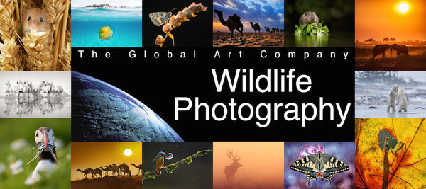 The Wildlife photography gallery on The Global Art Company