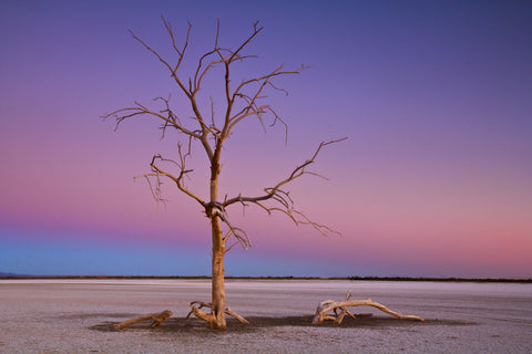 A Dried Salton Sea