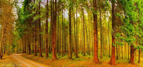 The Ochre Forest