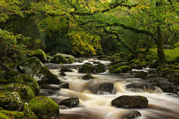 Long exposure photograph of a woodland Stream in Spring