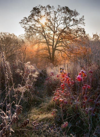 Autumn Story: Oak, Raspberry and Frost