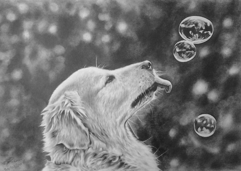 Black and White pencil drawing of a beautiful golden labrador