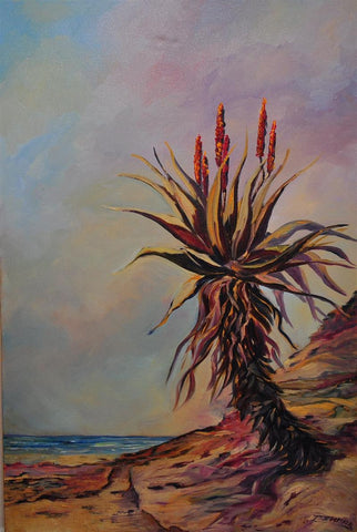 Transkei aloes on the beach