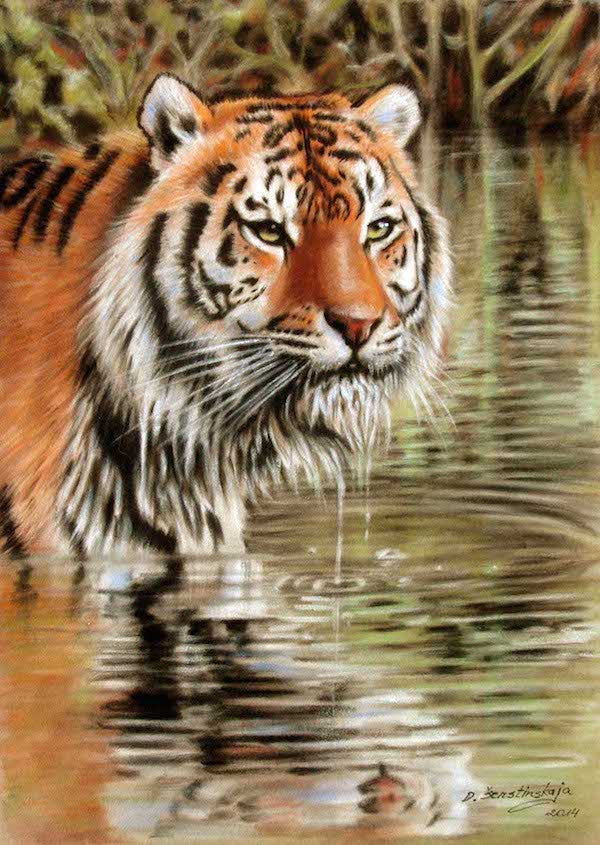 Stunning original pastel painting of a Siberian tiger standing in water in the jungle