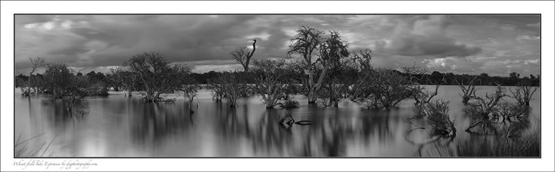 Panoramic photograph of the wheat fields with Lake Esperance in black and white