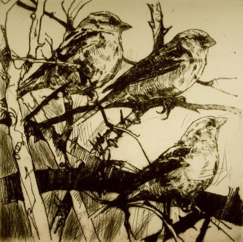 Three Sparrows Spectating
