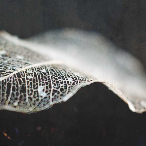Skeleton Leaf Abstract II