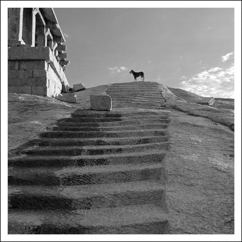Dog and Steps, Virayanagar Ruins, Hampi, India (2006)