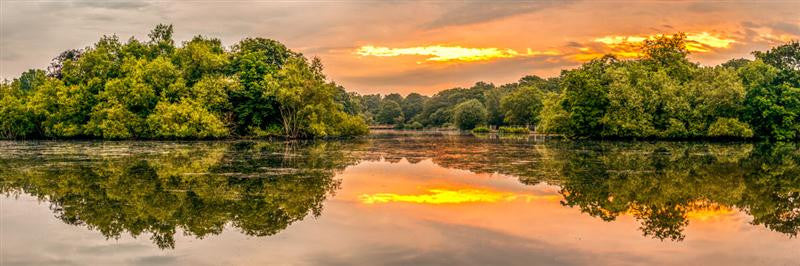 Epping Forest Sunrise