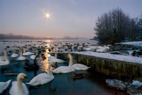 Frozen Whitlingham
