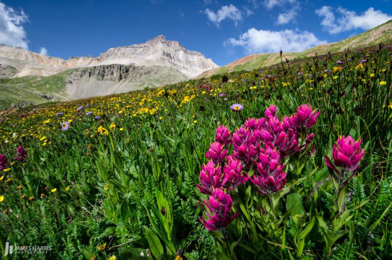 Colorado Wildflower Field
