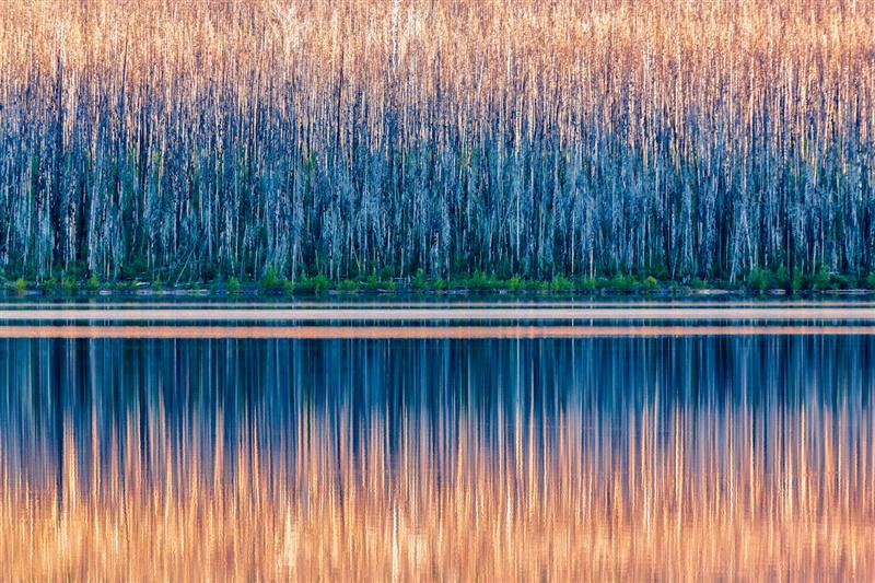 Abstract photograph of reeds and water