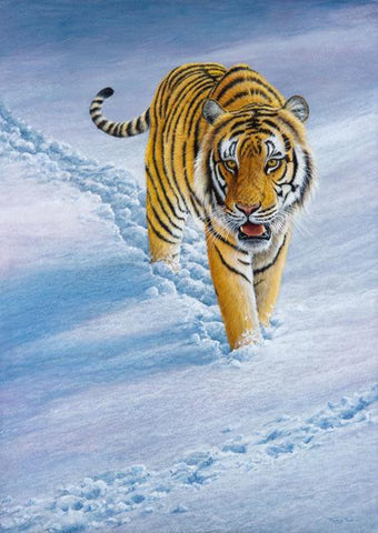 Tracks in the Snow - Siberian Tiger