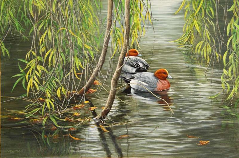 Original wildlife painting of wigeon ducks under willow trees