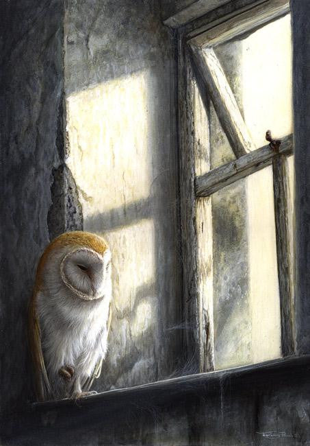 Beautiful wildlife painting of a barn owl sitting at a sun soaked window