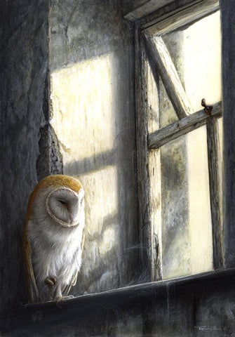 Window Light - Barn Owl