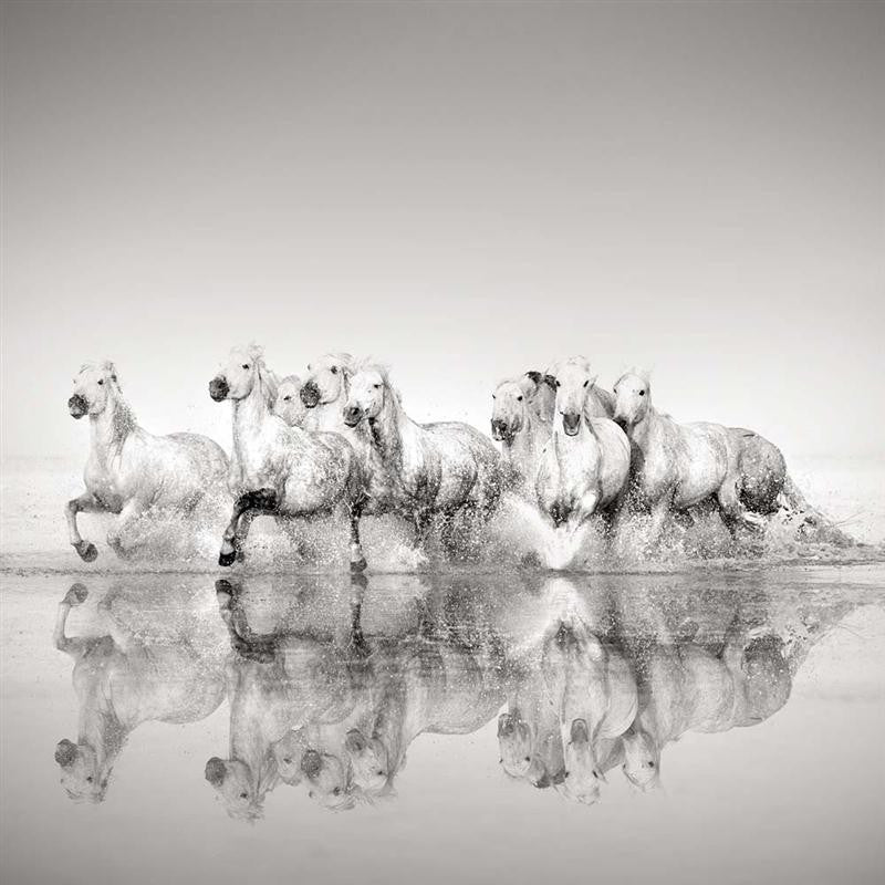 Photograph of horses galloping through the water on the beach in Black and White