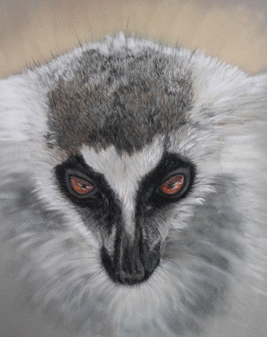 Mischief - The Ring Tailed Lemur