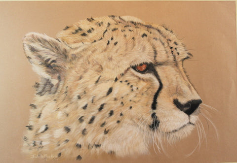 Contemplation - Cheetah