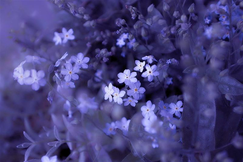 Epic of Blue Flowers