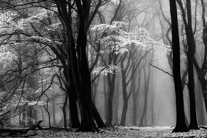Abstract black and white photograph of bare trees in winter in Holland