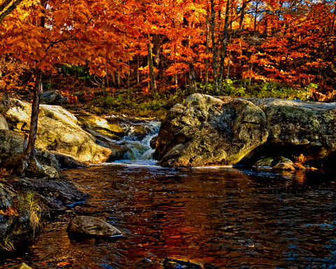 Stream in Autumn #57