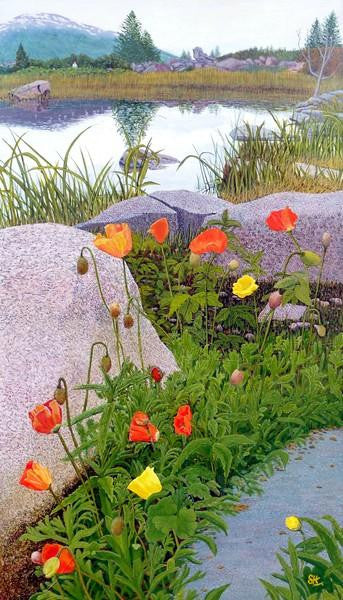 Poppies in Tromso