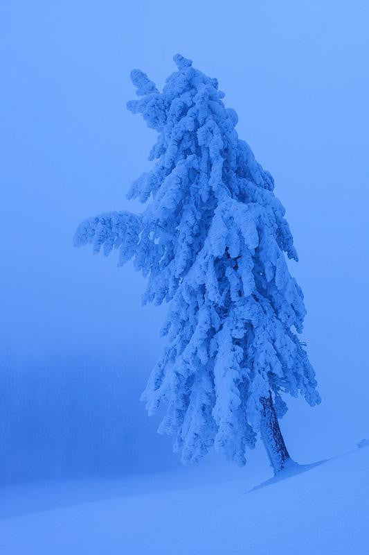 An amazing photograph of a tree completely cover in winter snow in the Arctic