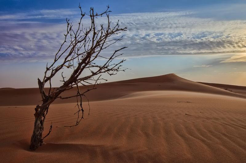 Stillness of Desert