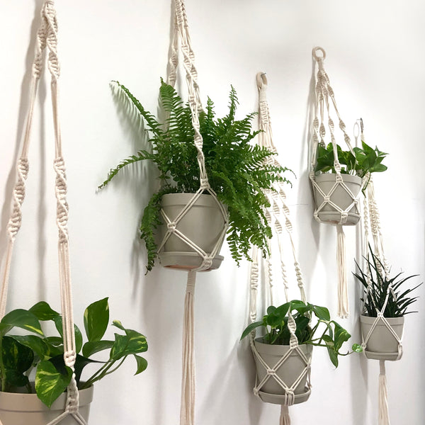 Create Your Own Classic Macrame Plant Hanger