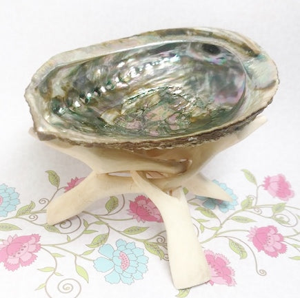 Abalone Shell Meaning  - Rosie's Market
