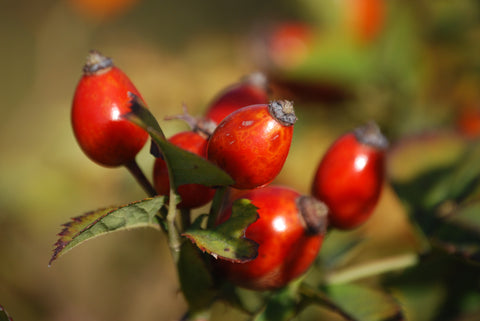 rosehips provide natural joint support and senior horse care