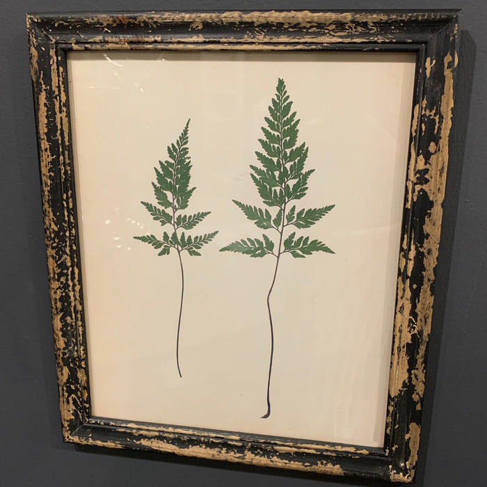 Rustic Framed Botanical Fern Picture(s) - Mayflower Furniture