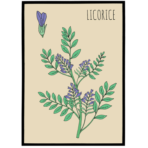 Licorice Botanical Poster