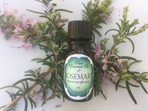 Pure Essential oil of Rosemary (Rosmarinus officinalis)