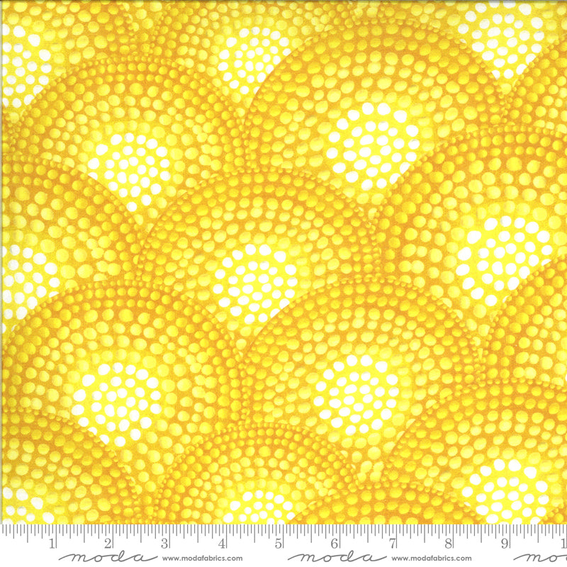 Yellow dotted circles with white centers