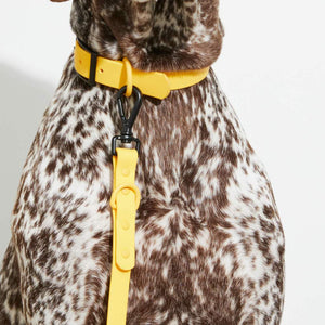 Waterproof Dog Collar Yellow