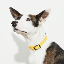 Load image into Gallery viewer, Waterproof Dog Collar Yellow