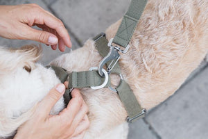 Cotton Canvas Dog Harness Khaki