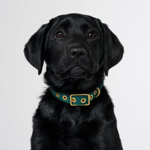 Load image into Gallery viewer, Recycled Canvas Dog Collar Teal