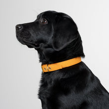 Load image into Gallery viewer, All Weather Canvas Dog Collar Mustard