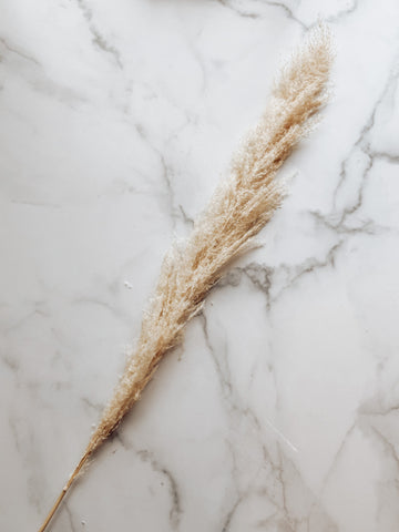 Dried Pampas Grass in Tan (per stem) - Brandt's Home Decor