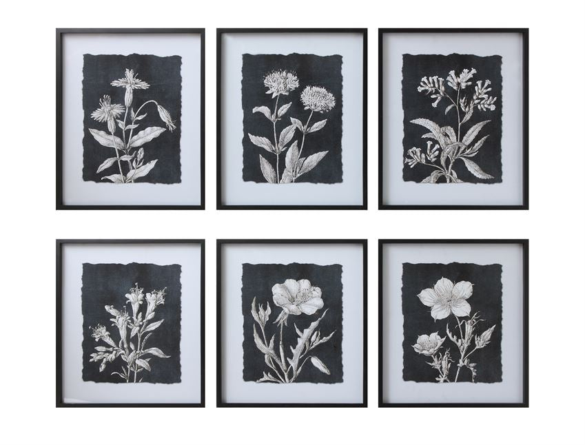 Black & White Botanical Print Wall Décor with Glass & Black Wood Frame (Set of 6 Styles)