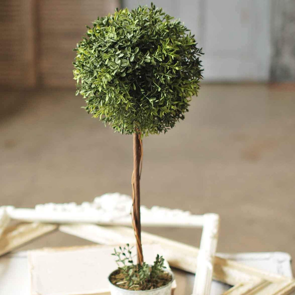 "23"" New England Boxwood Topiary"
