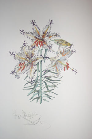 Salvador Dali Erotic Lily (surrealistic flowers)