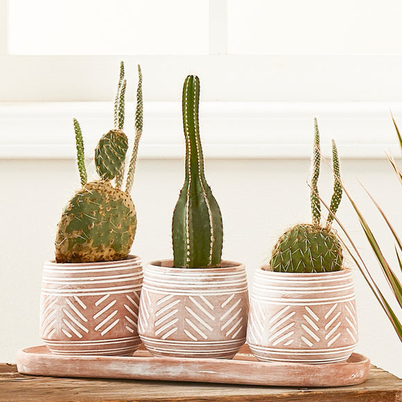 Terra-Cotta Trio Planter