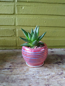 Pyrex Potted Succulent