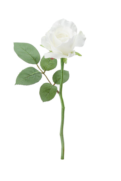 Rose Stem White